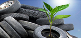 Seedling Tire