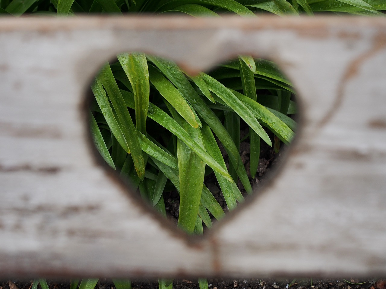 valentines-day-image-2