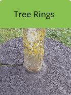 lowes-tree-rings
